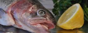 salmon-trout-540936_640